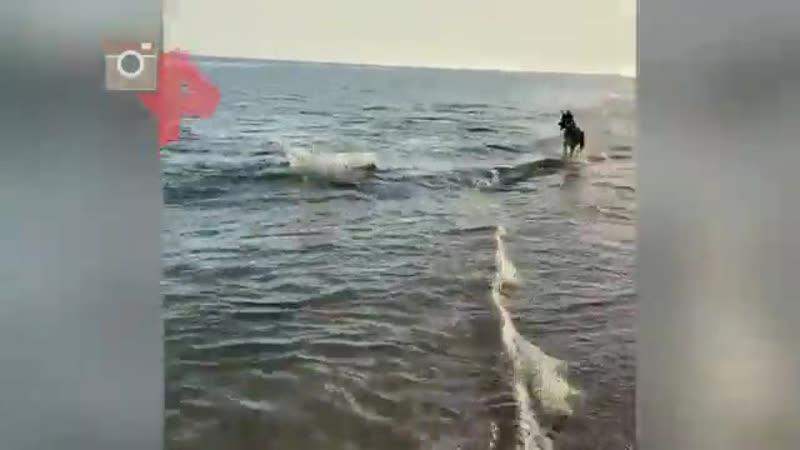 Видео в Крыму дельфин подплыл к берегу и подружился с собакой