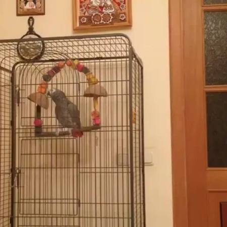 Never swear near a parrot