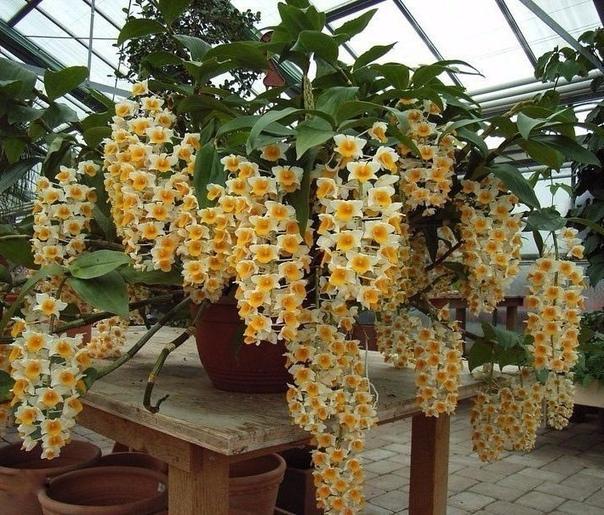 Вот это цветок (источник: gofazenda)