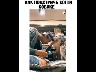"""""""Моя жена разработала свою систему стрижки когтей у собаки, да это выглядит нелепо, но это работает"""""""