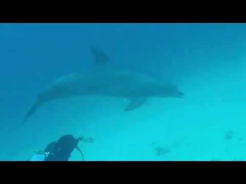 Дельфины Хургада январь 2017